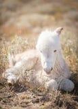 Âne nouveau-né de repos de bébé photographie stock libre de droits