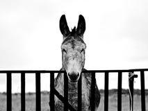 Âne sur un village espagnol en noir et blanc photos stock