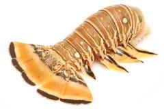 Ângulo da lagosta de Florida Imagem de Stock Royalty Free