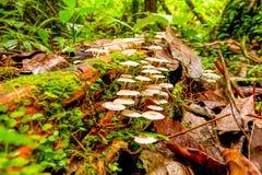 Ângulo do conjunto dos cogumelos baixo Fotos de Stock Royalty Free