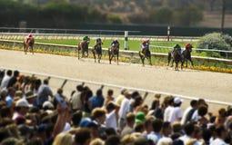 Ângulo largo da competência de cavalos Fotos de Stock Royalty Free