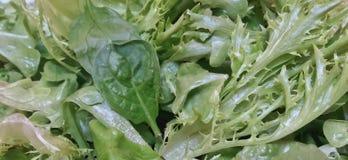 Ângulo largo: Mistura de folhas verdes orgânicas frescas da alface Fotos de Stock Royalty Free