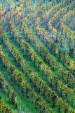 ângulos do vinhedo no outono imagens de stock