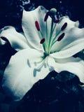 ПŒº цветка стоковые изображения rf