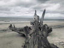 Öde strand för strandseriedrivved arkivbilder