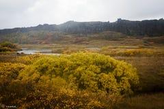 Þingvellir冰岛 库存图片