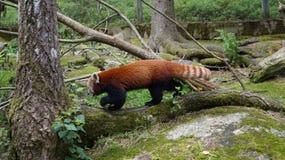 "à ""htäri动物园,芬兰 免版税库存照片"
