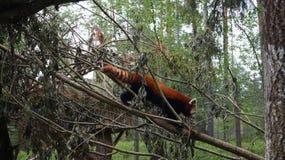 "Ã-""htäri Zoo, Finnland stockbilder"