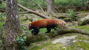 "Ã-""htäri Zoo, Finnland lizenzfreies stockfoto"