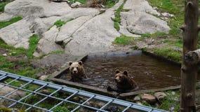 "Ã-""htäri Zoo, Finnland lizenzfreie stockfotografie"