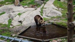 "Ã-""htäri Zoo, Finnland lizenzfreies stockbild"