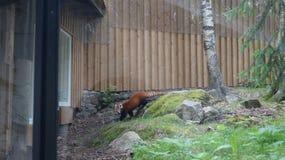 "à ""htäridierentuin, Finland Royalty-vrije Stock Foto"