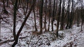 Ã-‰ gervölgy im Winter Stockbild