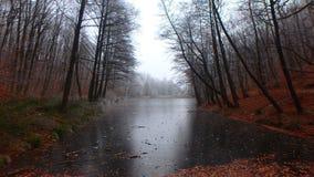 à ‰ gervölgy w zimie fotografia stock
