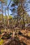 Ã-terra Trollskogen fotografie stock libere da diritti