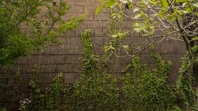 Ãrbol en el Muro royaltyfri fotografi