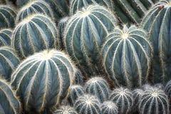 不同的大小的多汁植物,与Pricklies的仙人掌 免版税图库摄影