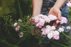 举行美好的桃红色的妇女在她的坐在开花的夏天庭院里的手上起来了花 免版税库存图片