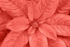 与主要的叶子定了调子年2019年,五颜六色的概念的时髦珊瑚颜色 免版税库存图片