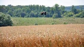 与一只鹳的夏天风景在领域 免版税库存照片