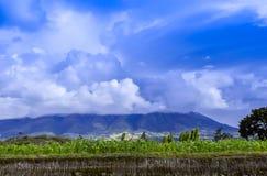 与云彩的天空在玉米种植园 免版税库存图片