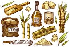 与叶子的蔗糖 设置甘蔗植物 茎和瓶兰姆酒、木板材匙子、立方体和汁液,竹子 皇族释放例证