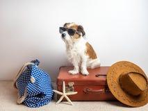与太阳镜的狗在旅行事例 库存图片