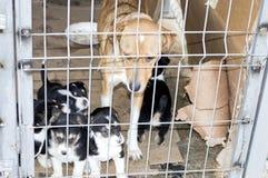 与小狗的狗关在监牢里房子避难所 库存照片