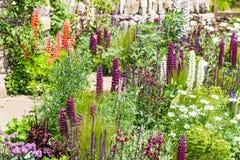 与开花的羽扇豆的美好的庭院风景 库存图片