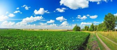 与地面乡下公路、绿色大豆领域和美丽的云彩的晴朗的夏天风景在天空蔚蓝 库存照片
