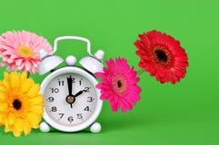 与减速火箭的闹钟的五颜六色的大丁草雏菊花在绿色背景 库存图片