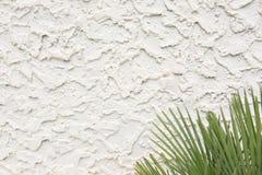与棕榈叶状体的波浪水泥灰泥纹理 图库摄影