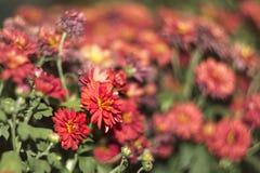 与模糊和swirly背景的红色花 免版税库存照片
