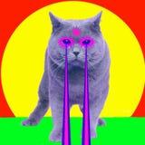 与激光的猫从眼睛 最小的拼贴画时尚概念 图库摄影