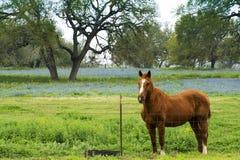 与春天矢车菊的马 免版税库存照片