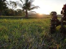 与拖拉机的稻田 免版税库存照片