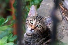 与斜向一边看通过篱芭酒吧的头的猫 免版税图库摄影