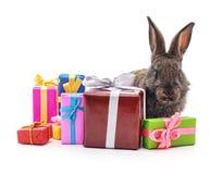 与礼物的一只棕色兔子 免版税库存照片