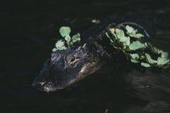 与绿色花的一条鳄鱼 图库摄影