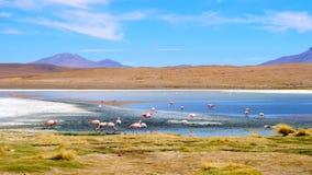 与美丽的火鸟群的令人惊讶的科罗拉达湖风景  股票视频