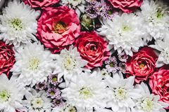 与玫瑰和白色菊花的美好的花卉背景 免版税库存照片