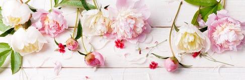 与瓣花的精美白色桃红色牡丹和在木板的白色丝带 顶上的顶视图,平的位置 复制空间 库存图片