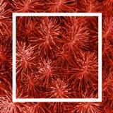 与白色框架主要的装饰草灌木叶子定了调子年2019年,五颜六色的概念的时髦珊瑚颜色 模板为 库存图片
