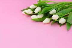 与白色郁金香的春天插花在桃红色背景,拷贝空间 免版税库存图片