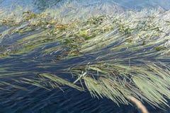 与草甸、水垄沟和小船的典型的平的荷兰乡下沼泽风景在水路 免版税图库摄影
