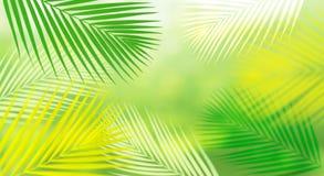 与迷离椰子叶子的夏天和自然背景 新鲜的绿色热带庭院 对关键视觉横幅 免版税库存照片