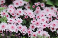 与自然后面地面的一朵菊花花 库存图片