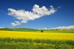 与黄色油菜籽领域的春天风景 库存图片