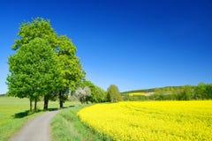 与黄色油菜籽领域的春天风景 库存照片