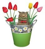 与郁金香的猫在桶 图库摄影